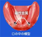 口の中の模型